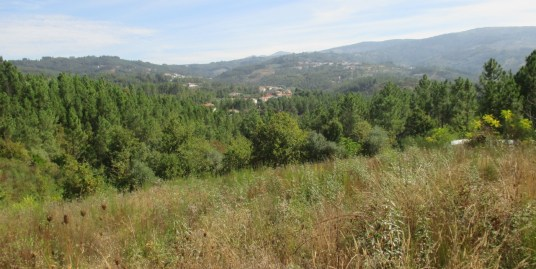 Land with cork and oak trees (RK28CO)