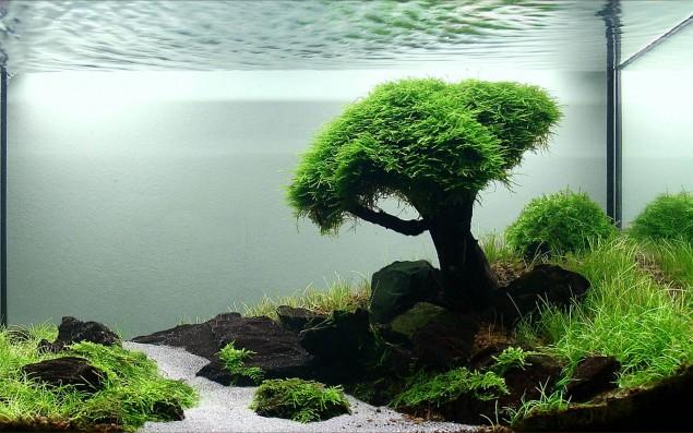 Underwater Pond Plants