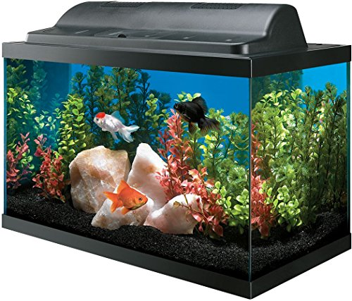 A Guide to Finding the Best 10 Gallon Fish Tank for You 10 Gallon Home Aquariums