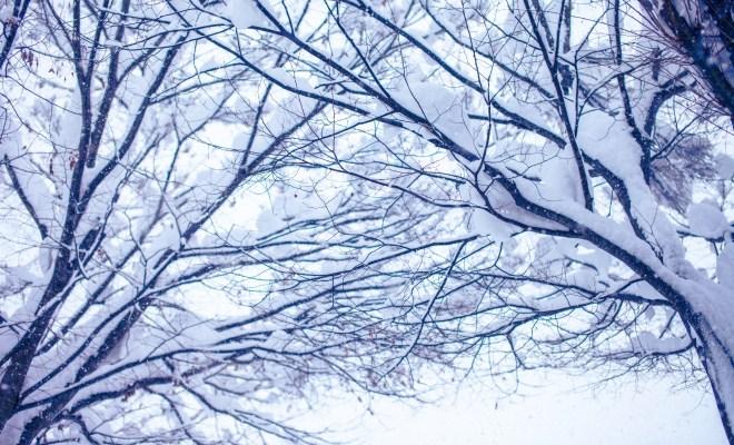 アクアリスト 冬 水温対策 f