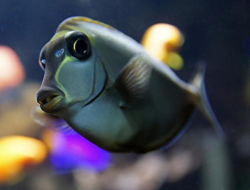 photo credit: Fisch via photopin (license)