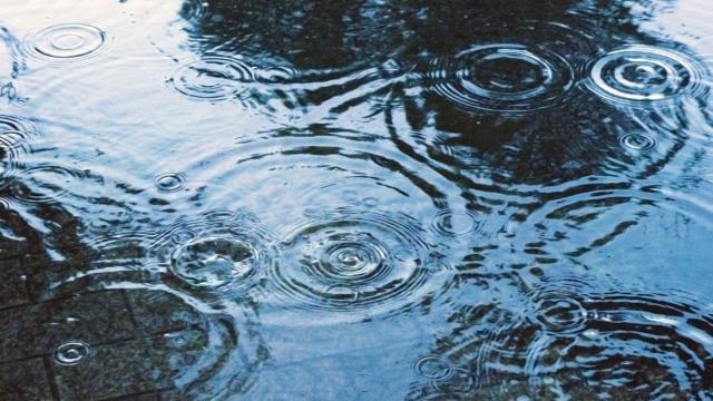 地面に広がる雨の足跡 f