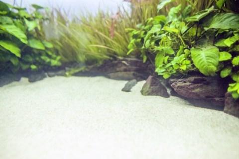 ラミノーズテトラに適した水槽の大きさは45cm