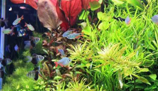 熱帯魚飼育を始めよう 必要なグッズと飼育のポイントまで
