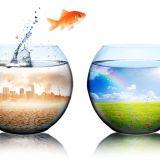 魚の病気の話…その1 病気の主な原因と準備編