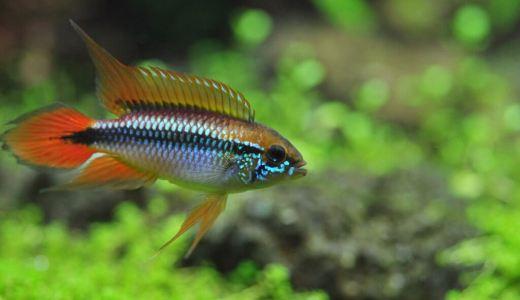 熱帯魚や水草に合った底砂の選び方を解説