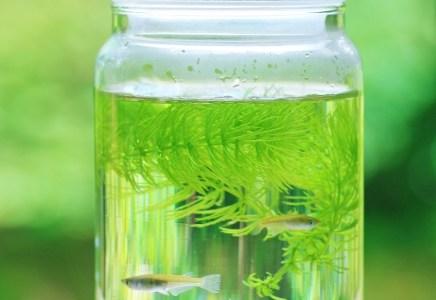 ボトルアクアリウムに最適な魚と水草!丈夫な生体でないとダメな理由とは