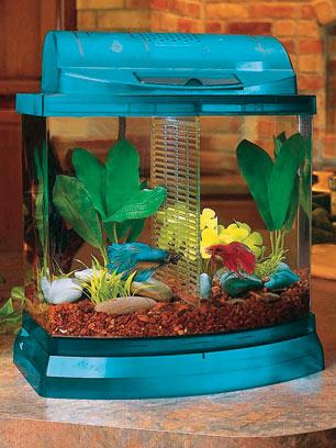 http://www.liveaquaria.com/images/articles/a-small-aquarium-21227.jpg
