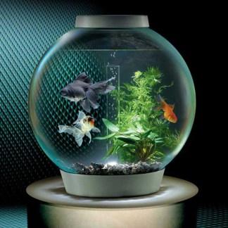 http://www.thegreenhead.com/imgs/xl/biorb-self-filtering-aquarium-xl.jpg