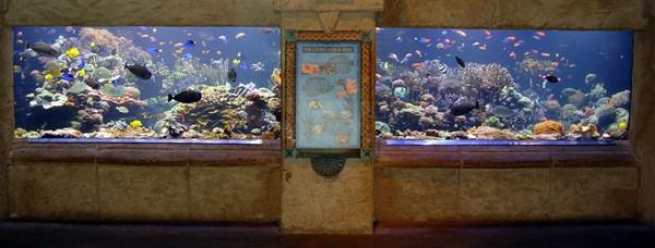 http://www.advancedaquarist.com/2007/2/aquarium