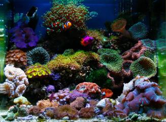 http://www.pfacyprusproperties.com/saltwater-aquarium-need-very-serious-treatment.html