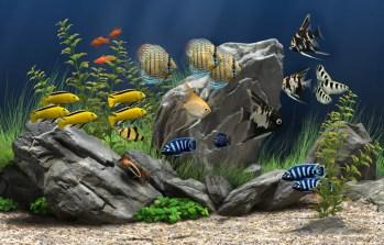 http://www.dreamaquarium.com/images/soft_rock_1024_B.jpg