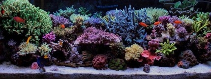 http://reefkeeping.com/joomla/images/stories/totm/june10/fts/fst_lg.jpg
