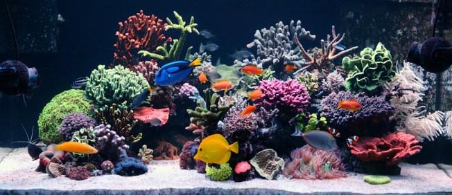 http://reefkeeping.com/joomla/images/stories/totm/july11/fts_lg.jpg