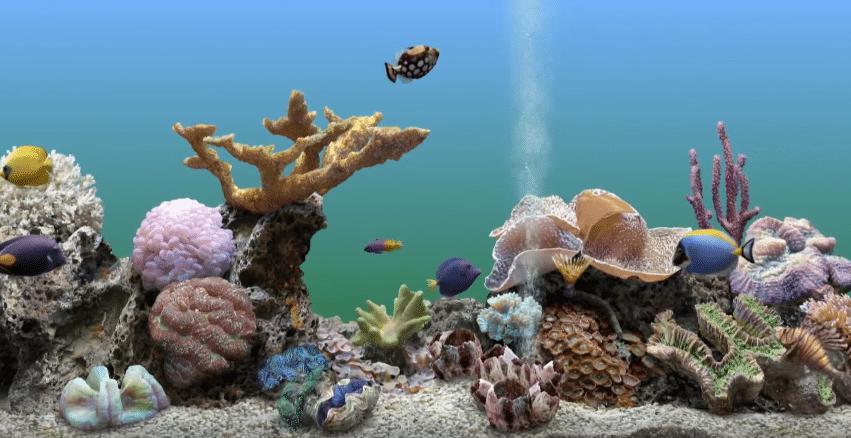 benefits of aquarium at home