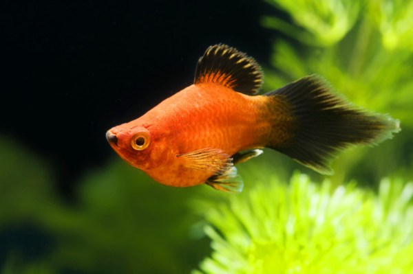 Неприхотливые аквариумные рыбки для начинающих - фото и ...