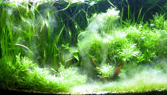 Aquarium Algae Problems - How can you fixing in your aquarium