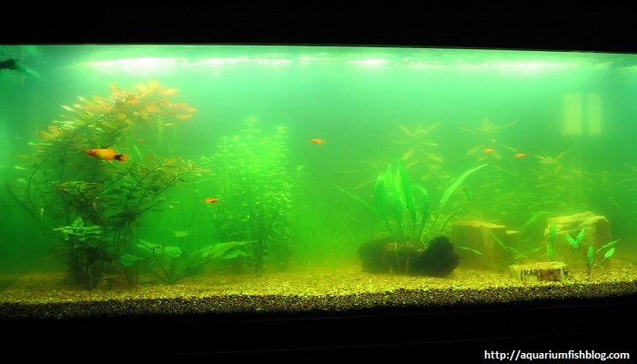 Aquarium Algae Problems - How can you fixing in your aquarium