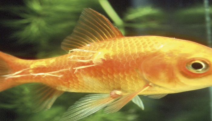 10 common aquarium fish diseases- How to treat your aquarium fish