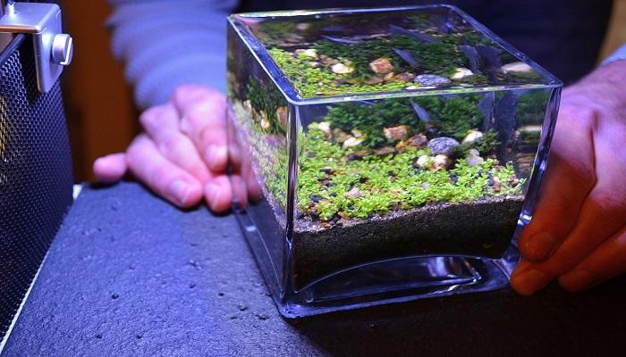 Planted Nano Tank How To Start An Aquascaping Planted Nano Tank
