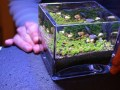 Planted Nano Tank- How to Start an aquascaping planted nano tank?