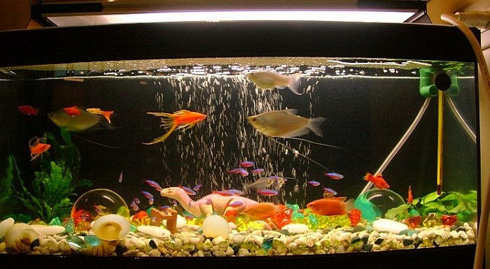 Aquarium Pump-How to choose the best aquarium pump?