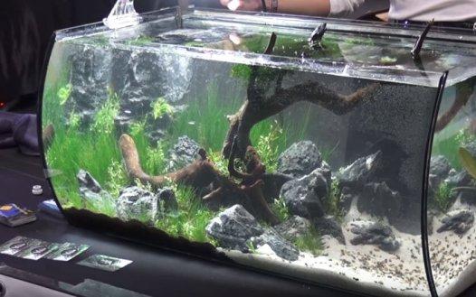 Image result for aquarium tank