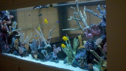 See through aquarium