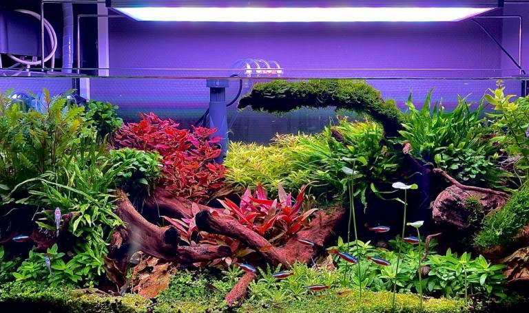 Dark start aquarium