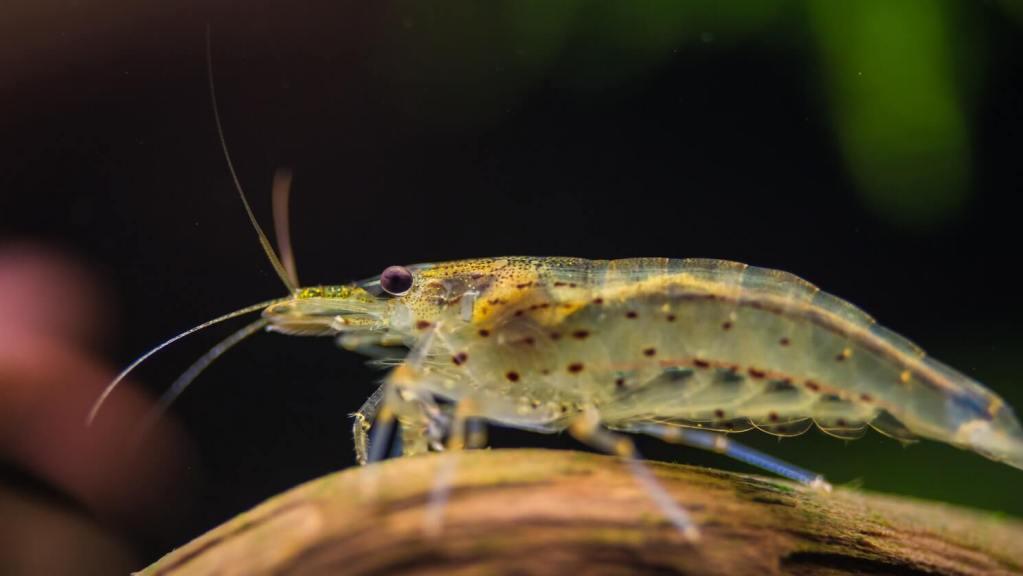 garnaal aquarium