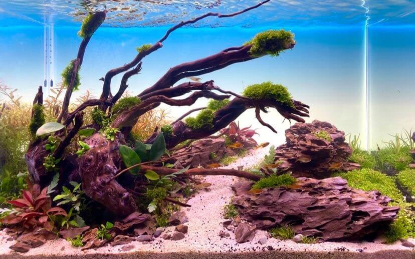 Aquarium opstarten