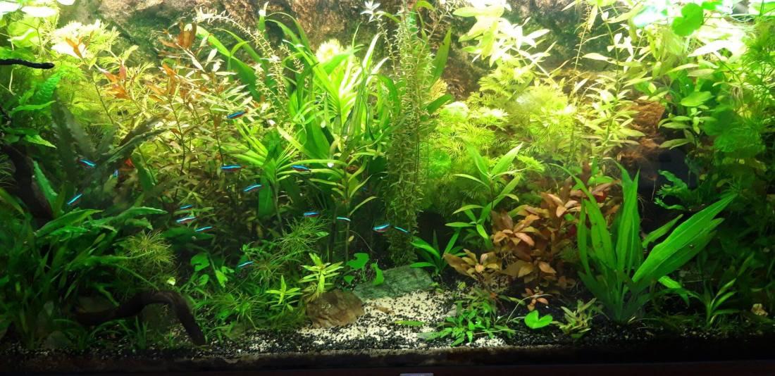 Beplant aquarium voorbeeld