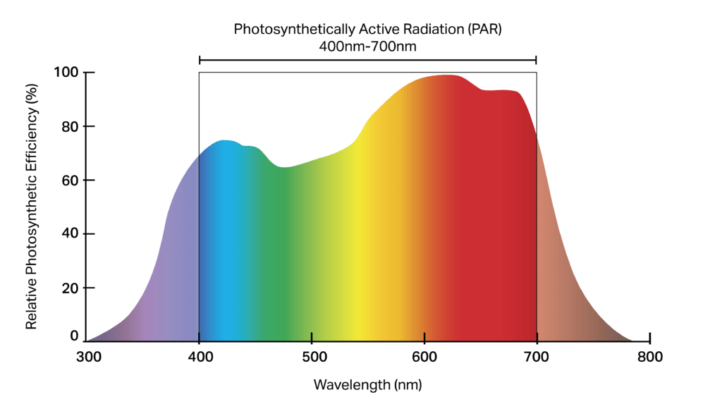 full spectrum lamp