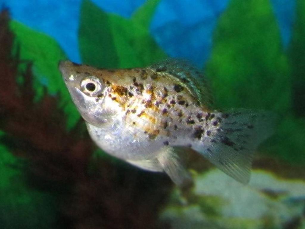 Aquatic Plants Fish Ponds
