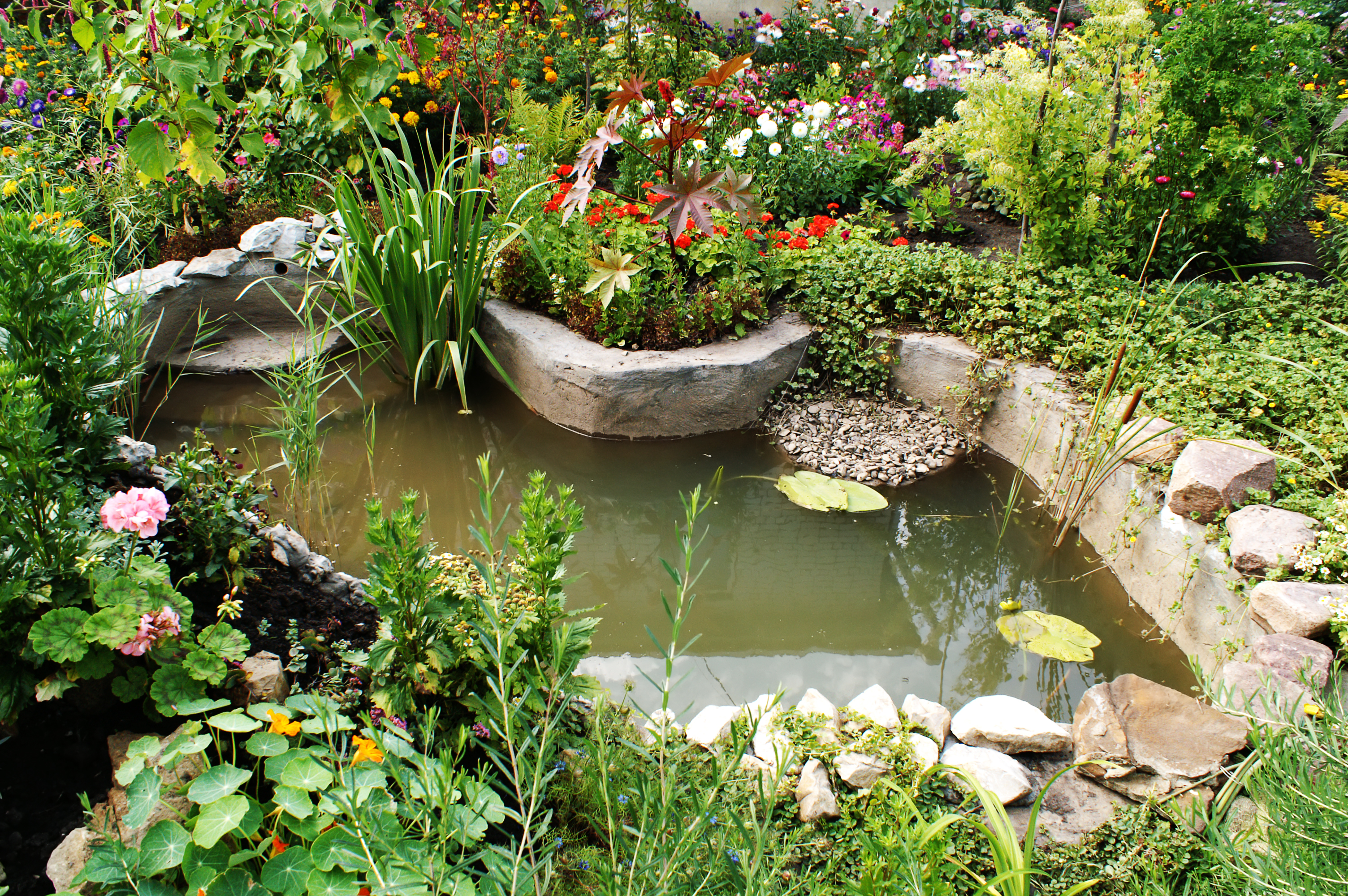 How To Build A Pond A Beginners Guide To Building The Perfect Backyard Pond Aquarium Tidings