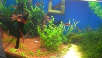 How to Add Rocks to An Aquarium - Aquarium Tidings