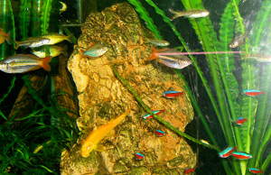 Tropical Fish Tank 2