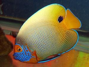 Tropical Fish 57