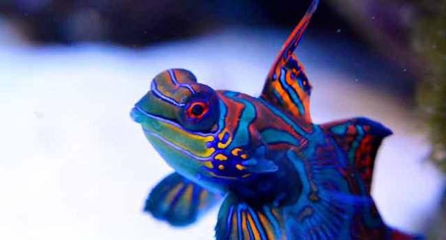 Keeping Tropical Fish