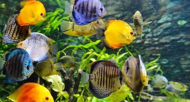 Aquarium Fish Illnesss