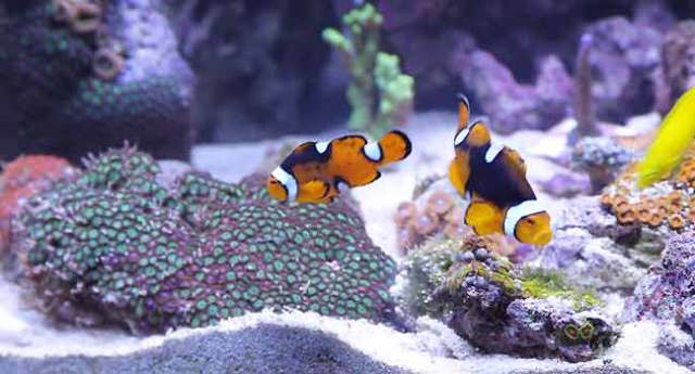 how to care for your Saltwater Aquarium