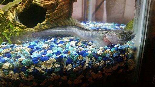 Names Freshwater Fish Live