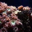 Should A Novice Start A Saltwater Aquarium?