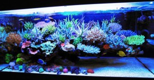 Marine Aquarium Setup (Reef Aquarium)