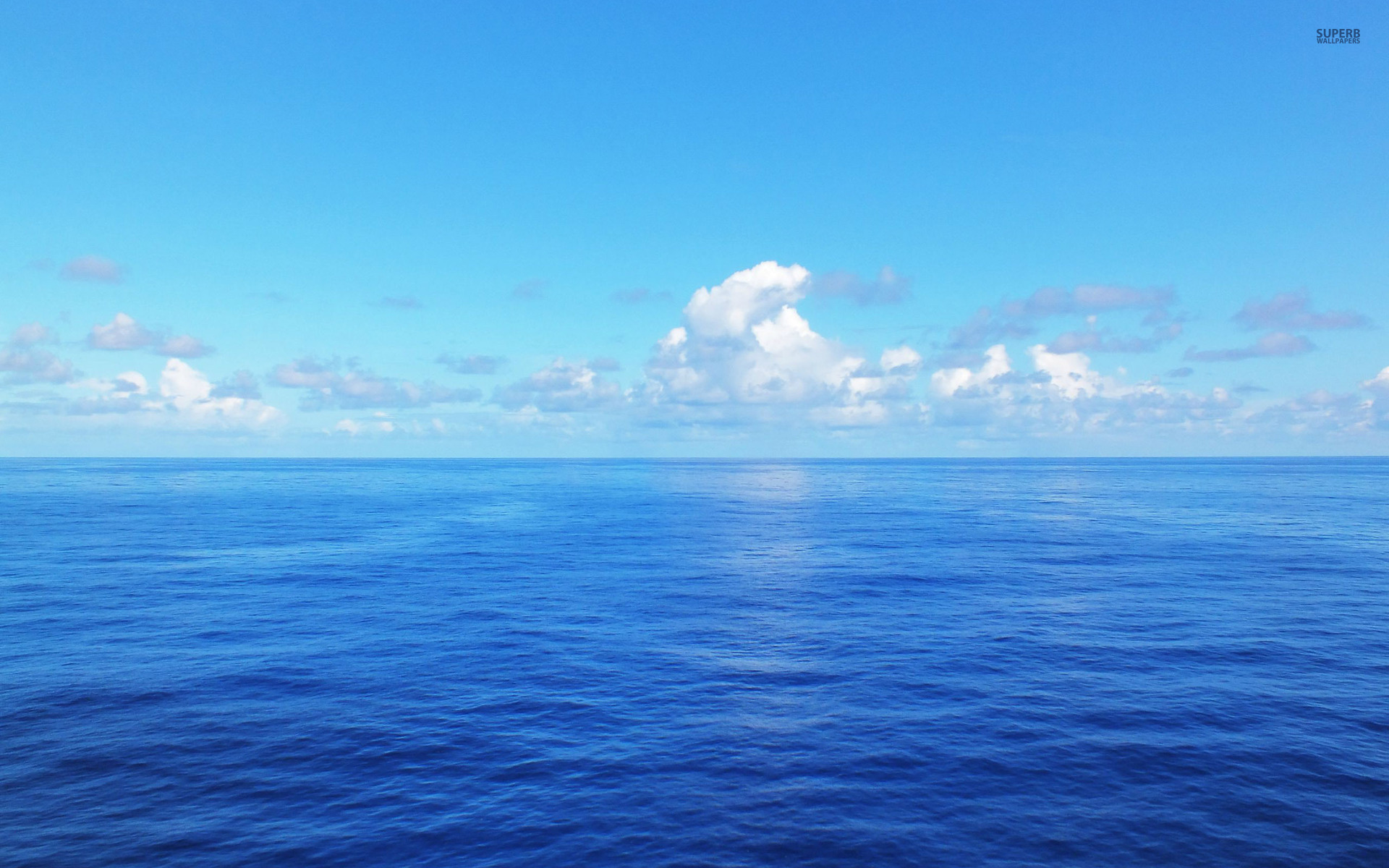 How To Celebrate World Oceans Day And Raise Ocean