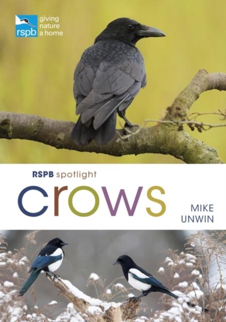 Spotlight Crows