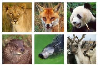 Mammal Portraits greetings cards