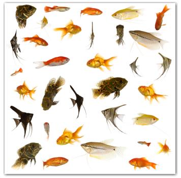 Aquarium Fishes Names Aquarium Fish Names Fish That You Might See