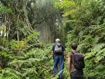 Výstup pralesem