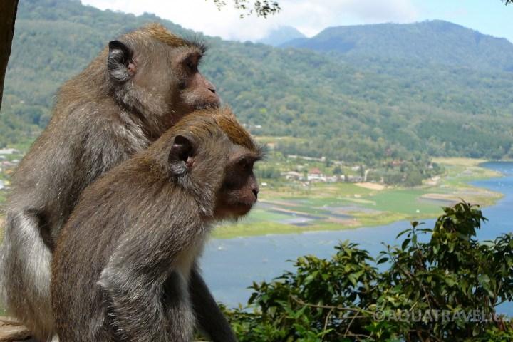 Makakové u jezera Buyan